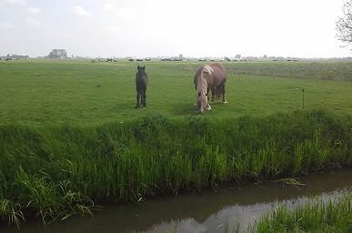 paarden-sm